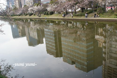 さくら・桜5