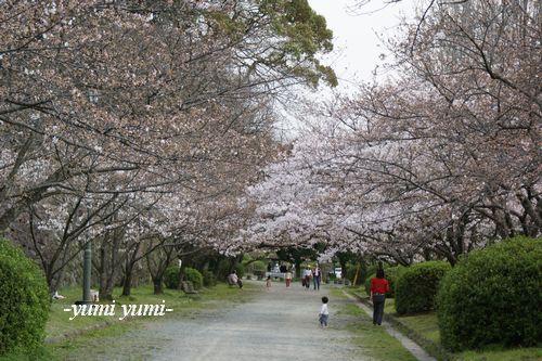 さくら・桜8