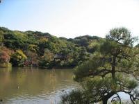 三渓園お庭