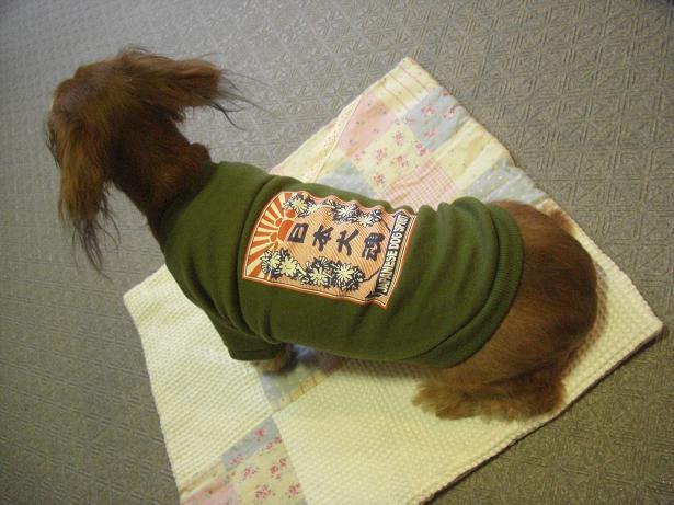 日本犬魂2