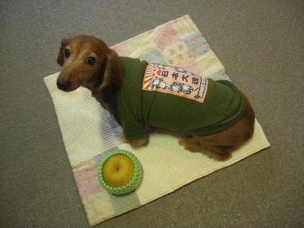 日本犬魂4