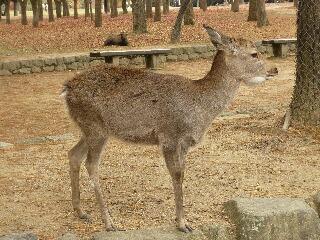 11.22鹿