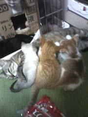 母猫授乳中