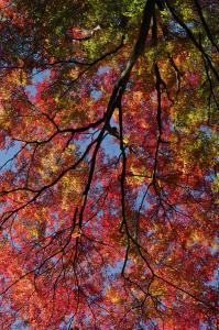 箕面の紅葉