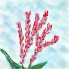 藍染のアイの花