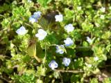 柚子(ゆず)画像 花