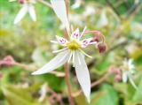 田舎 発見 花 虫 様々 癒し