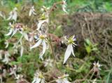 菜の花 隣 変わった 野花 始めて 形 他 茎 花の形 明らか