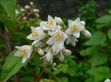 道端に咲いていた花を撮りました。この近くには段々畑があって、とても風情を感じる風景が広がっていました。