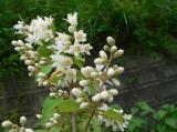 写真 柚子(ゆず) 花 間違い 全く 別の花 道端 たくさん 咲いていました