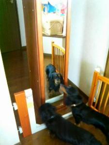 鏡に映ってるのがルー、手前は武蔵です。