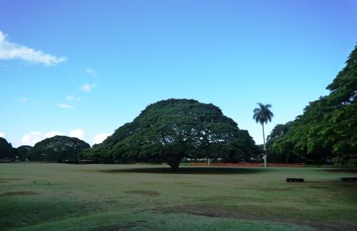 HAWAII09 (5)