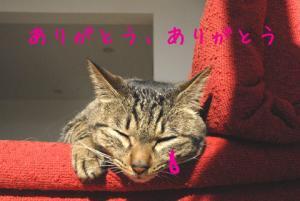 _DSC0337.jpg