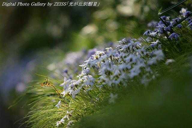 IMG_070331_01.jpg