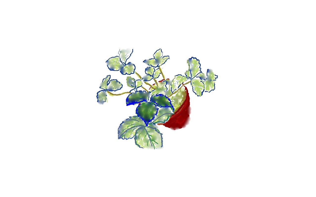 ワイルドストロベリー