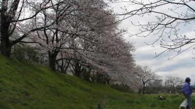 2009年入間川の桜1