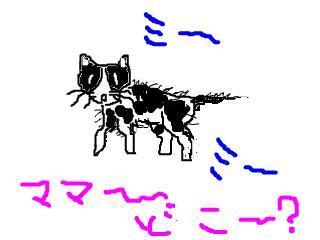 snap_chibitaseiko_2008123115625.jpg