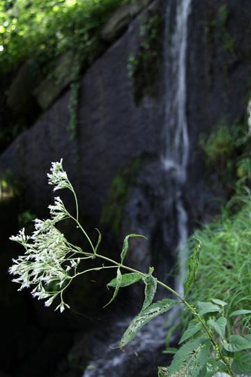 20090812_nihonmatsu_castle-14.jpg