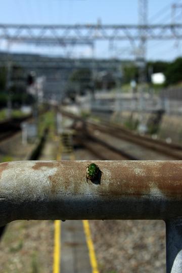 20090927_higashi_ikoma-01.jpg