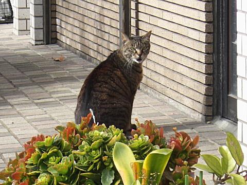 東向島の猫①