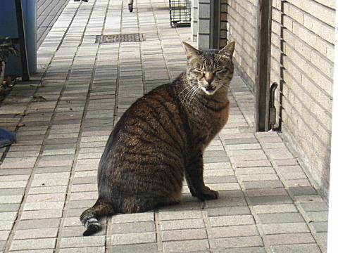 東向島の猫③