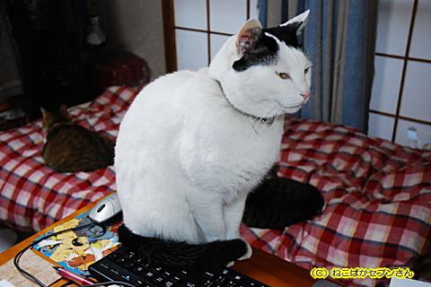 ヅラ猫先生