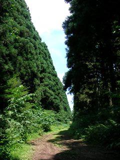 小岩井自然散策5