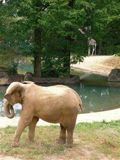 アフリカゾウとキリン