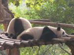 kuturogi-panda2.jpg