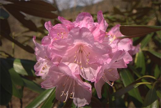 20090419-8.jpg