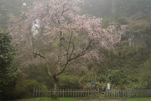 20090425-7.jpg