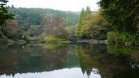 20091018原生の森4