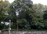 20091017-28御殿山2
