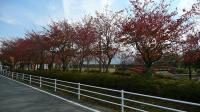 20091108狩野川3