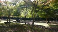 20091107昭和の森2