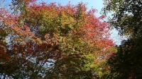 20091107昭和の森3