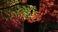 20091107昭和の森4