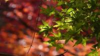 20091107昭和の森5