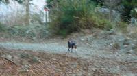 20091121-95犬越路35-1