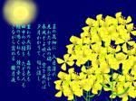 菜の花08-夜の月(歌詞)
