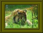 tiger-gaku.jpg