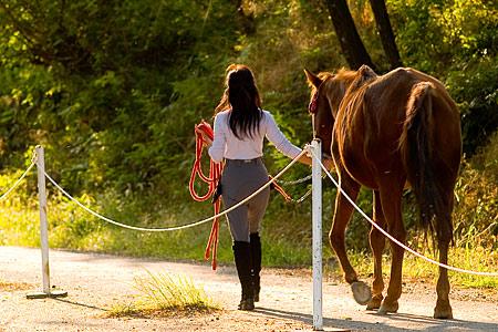 逆光の馬と女の人