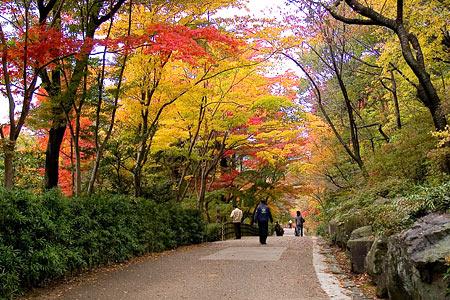 東山植物園紅葉トンネル