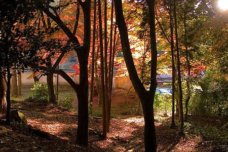 雲興寺境内の紅葉