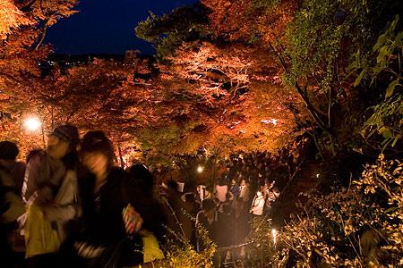 鎌倉こぼれ写真-10