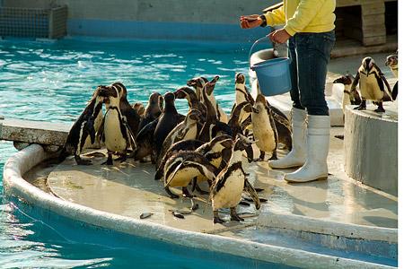 マリンランドのペンギン-6