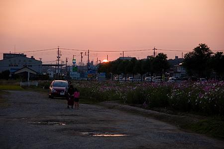 ニコン近所写真-3