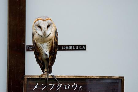 フクロウコレクション-4