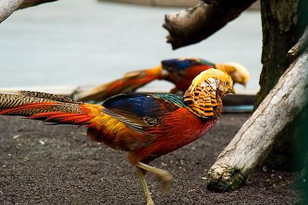 鳥いろいろ-1