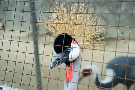 鳥いろいろ-4